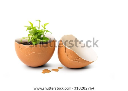 Green plant sprout internal broken eggshell isolated on white background in concept of new natural life - stock photo