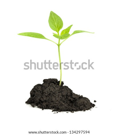 Green Plant the concept of new life - stock photo