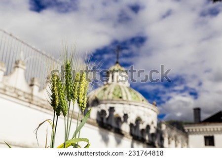 green plant with beautiful dome of La Compania church in the background Quito Ecuador South America selective focus - stock photo