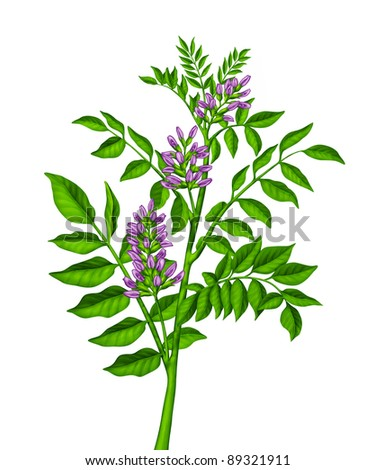 Green plant with purple flowers - stock photo