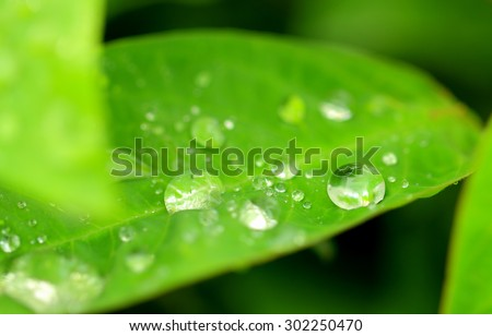 Green plant with rain drops