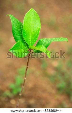 Green plant with raindrops - stock photo