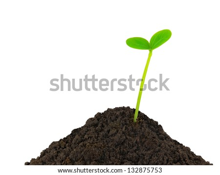 Green plant young seedling in the soil on a white background