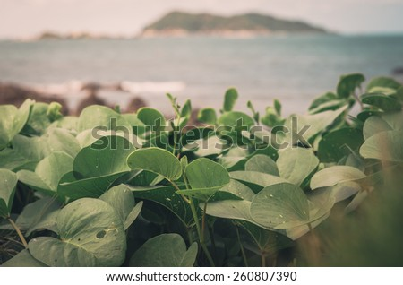 Green plants and sea nature landscape in Thailand vintage - stock photo