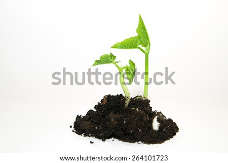 Green plants growing from a pile of soil on a white background