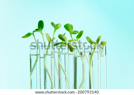 Green plants in a row of test tubes with water - stock photo
