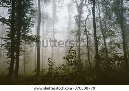 green plants in forest - stock photo