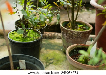 Green plants in pots  - stock photo
