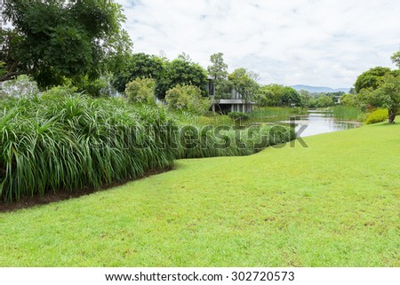 green  plants in tropical wetland,  in a natural pond