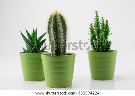 Green plants isolated on white background.
