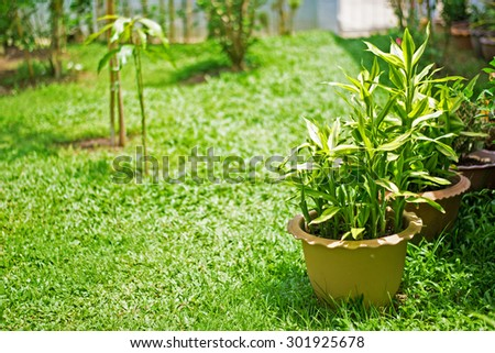 Green plants on grass field in the garden - stock photo
