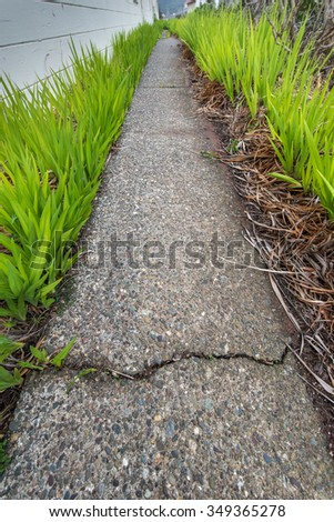 Green plants surround an old walkway by the side of a building - stock photo