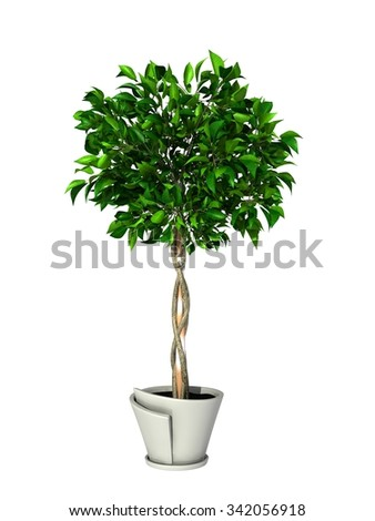 green potted plant isolated on white background.