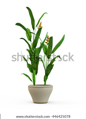 Green potted plant isolated on white background. 3D Rendering, Illustration.