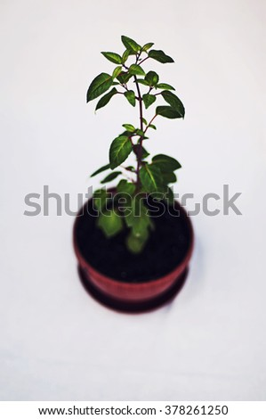 Green potted plant isolated on white background. Studio image of a miniature artificial tree in a pot. Concept image for interior design or office furniture use against a white background.   - stock photo