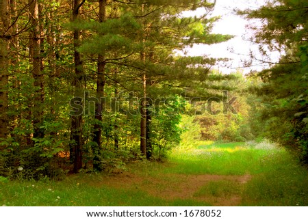 Green quiet forest on hot summer day