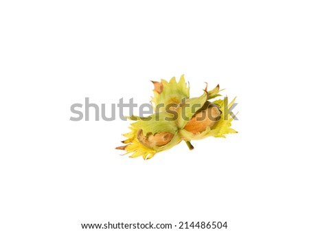 Green rawhazel nuts isolated on white background - stock photo