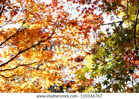 Green, red and orange leaves in forest
