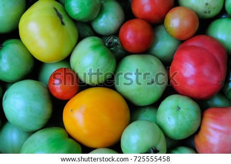 green, red and yellow tomatoes.