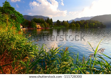 Green reed and trees on a lake Bled among mountains