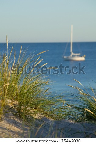 Green reed growing in a sand dune whit ocean and a sailboat in the background.GN - stock photo