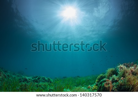 green reefscape - stock photo