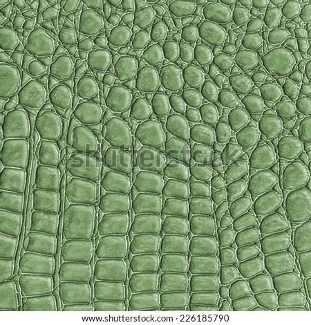green reptile skin texture closeup, fragment of natural pattern - stock photo