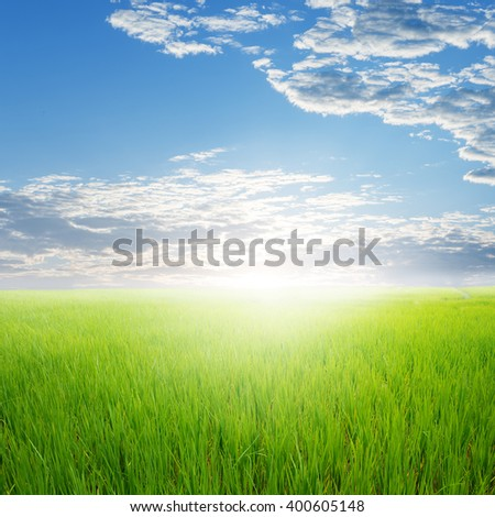 Green rice field and clouds sky for background - stock photo