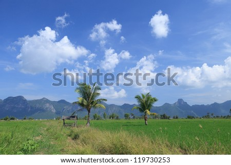 Green rice field and coconut tree beside a small house in Thailand