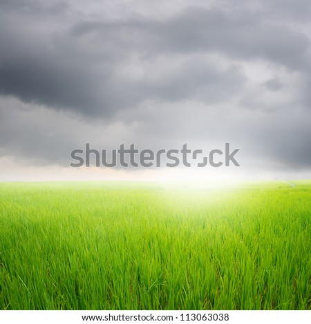 Green rice field and rainclouds