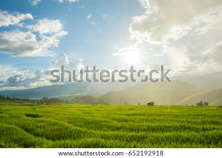 Green rice field raining with mountain background at Pa Pong Piang Terraces Chiang Mai, Thailand