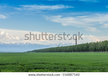 green rice field under blue sky in Sinkiang,China