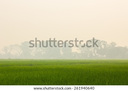 green rice field with background of smoke, thailand - stock photo
