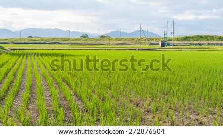 Green rice field with blue sky at Japan