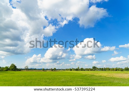Green rice field with cloudy blue sky background ,countryside background .