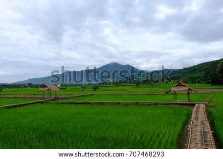 Green rice field with straw hut in Pua province Nan, Thailand and mountain background