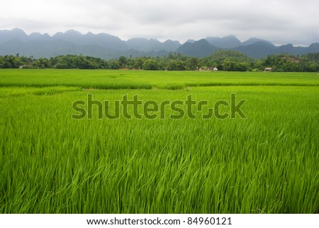 Green rice fields and mountains in Northern Highlands of Vietnam South East Asia
