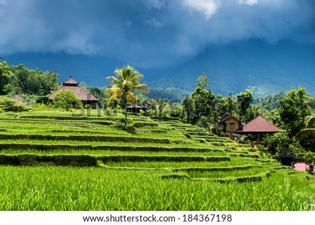 Green rice fields on Bali island, Jatiluwih, near Ubud, Indonesia, Asia - stock photo