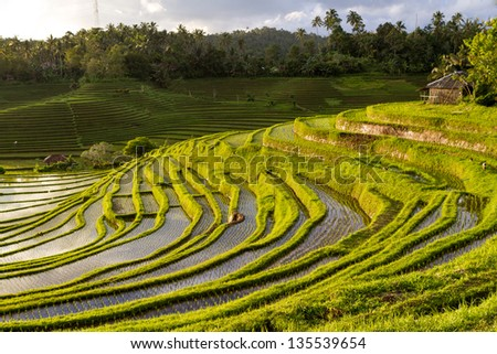 Green rice fields, the sky with clouds and water reflections - stock photo
