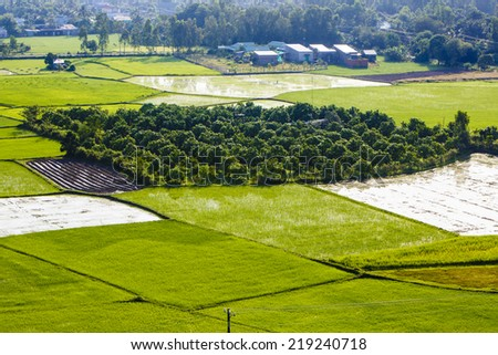 Green rice paddies, inside has orchards and farmers are fertilizing the fields at Chau Doc, An Giang Province - stock photo