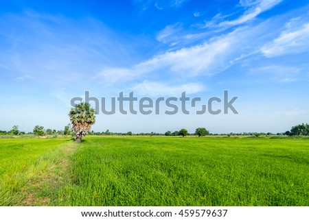 Green rice paddy fields