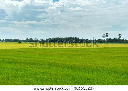 Green rice plant in thailand location is big food supply farm