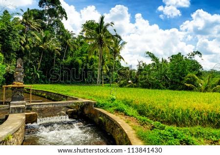 Green rice terraces. Bali, Indonesia. - stock photo