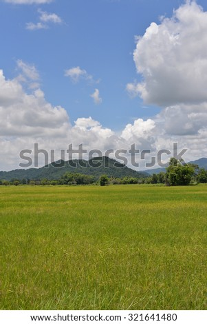 Green ricefield with the bluesky