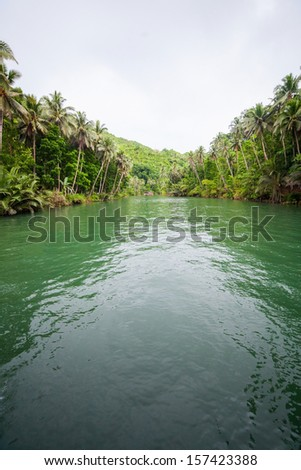 Green river bank in Bohol Philippines