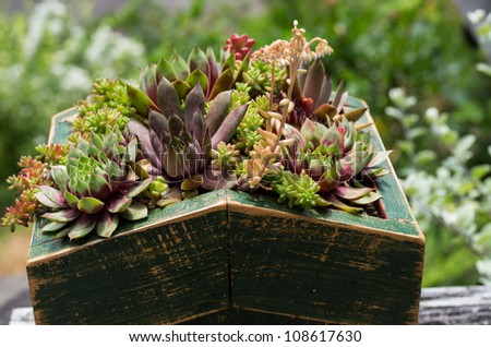 Green roof of sedum plants used for sustainable construction - stock photo