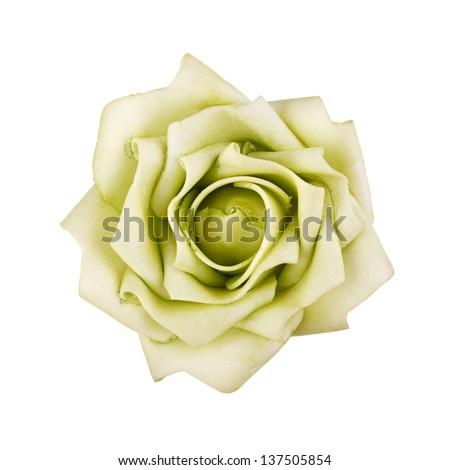 green rose isolated on white background - stock photo