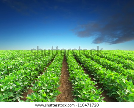 Green rows and sky. Natural composition - stock photo
