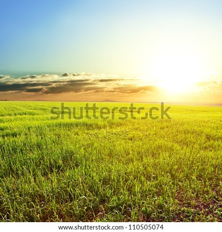 green rural field at the early morning - stock photo