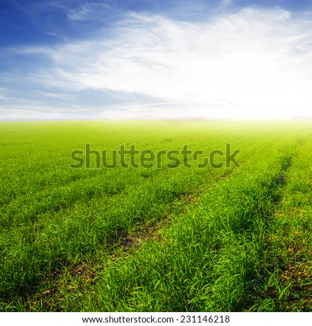 green rural field at the morning - stock photo